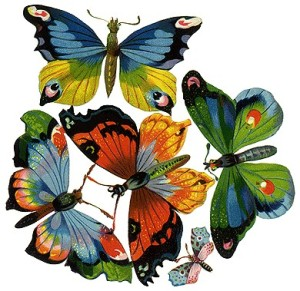 This is a butterfly!